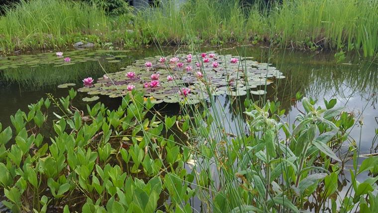 Teichgestaltung Gartengestaltung Reichhart